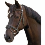 Bridle with flash noseband, croco