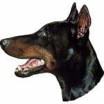 Dobermann Pincher  sticker